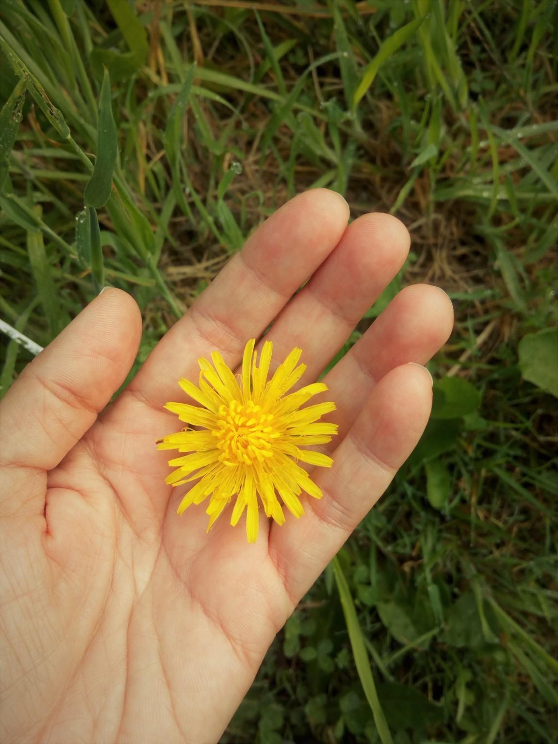 flor moneda